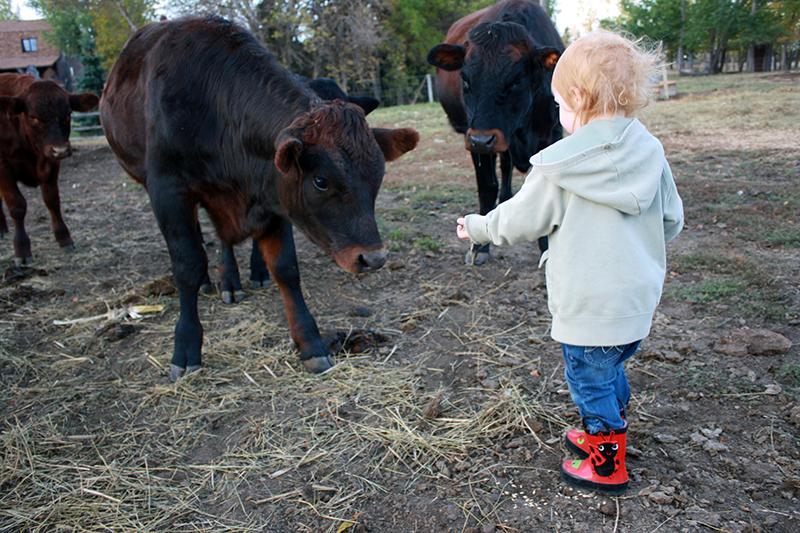Sch-visit-cows