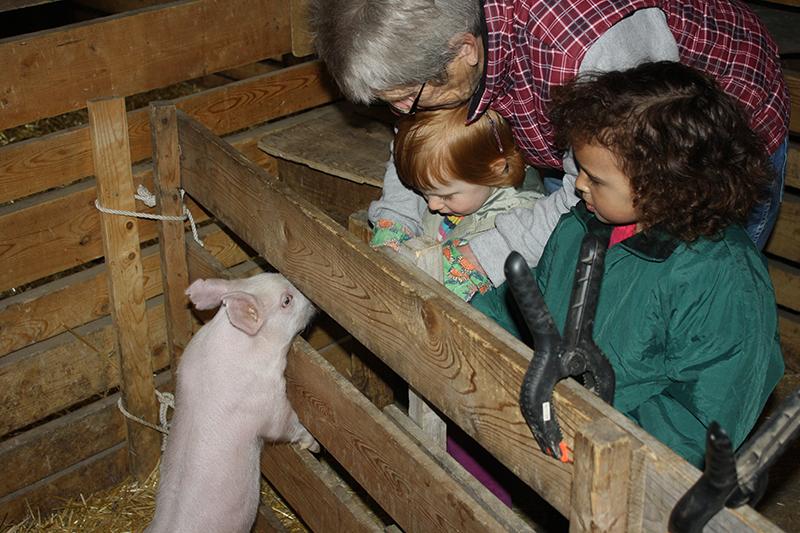 sch-visit-pig
