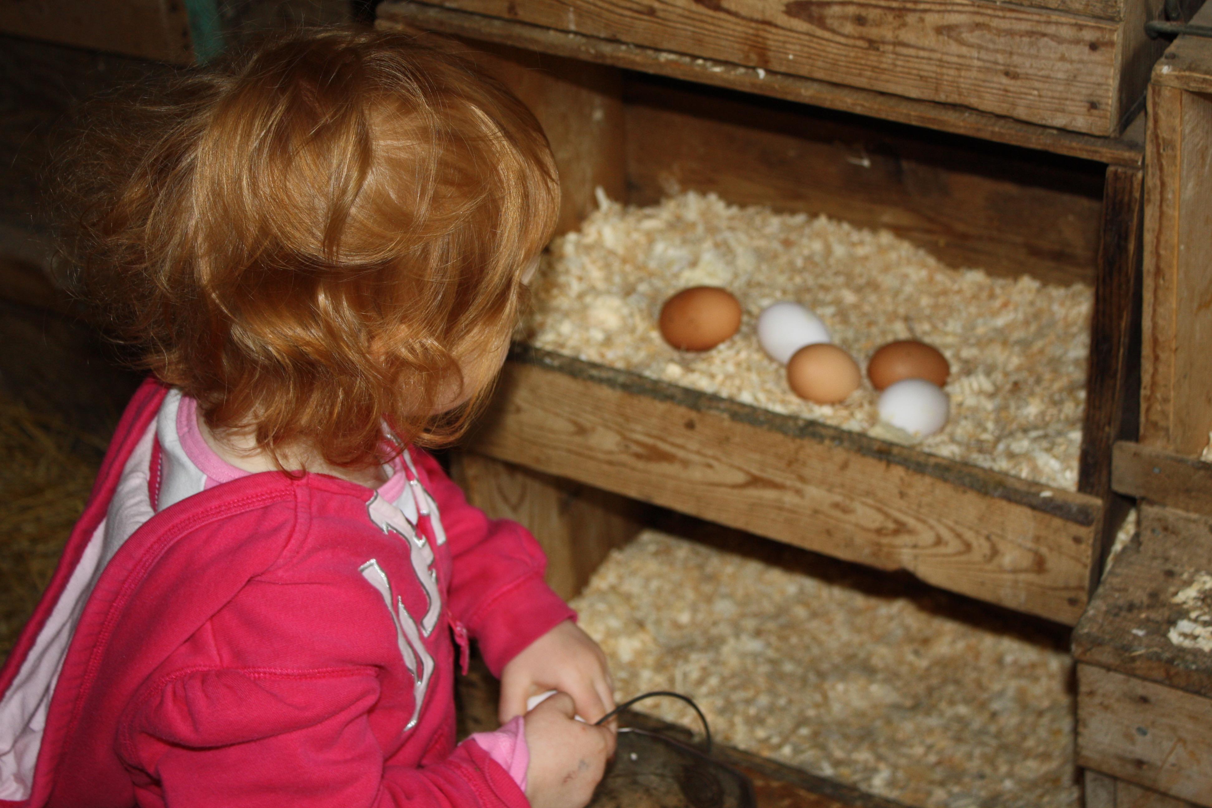 Sch visit eggs