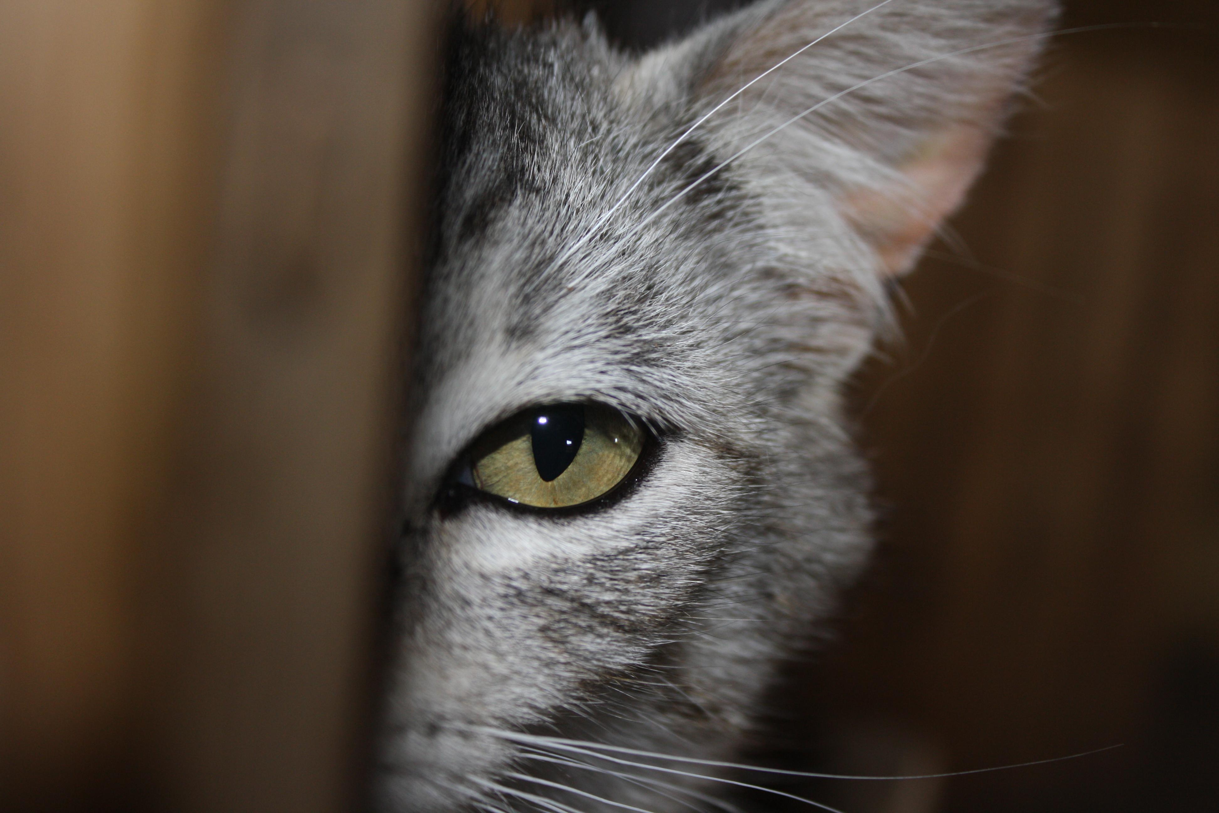 Sch visit kitten 3
