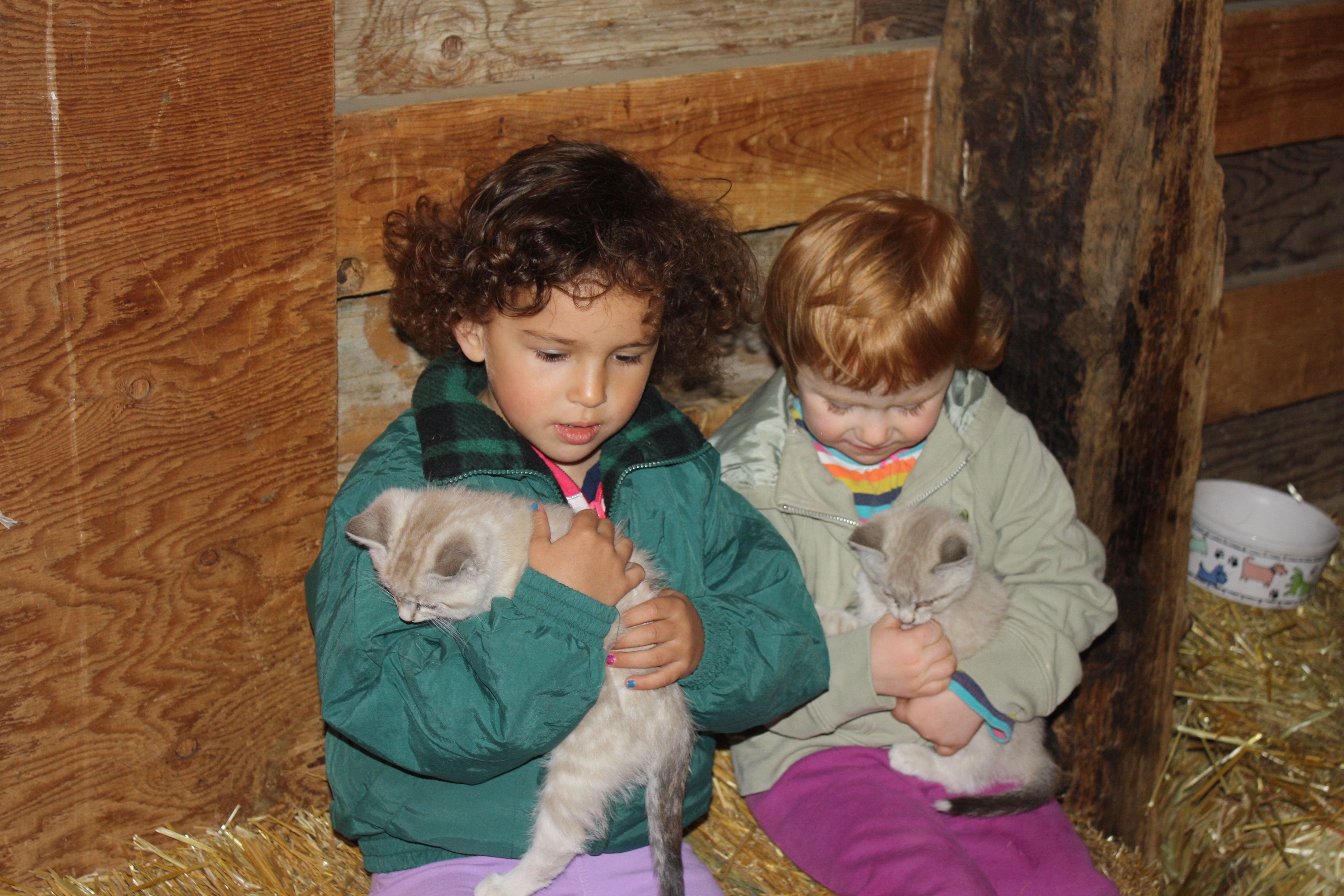 Sch visit kittens